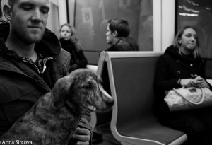 man holding a dog on his lap in Copenhagen metro